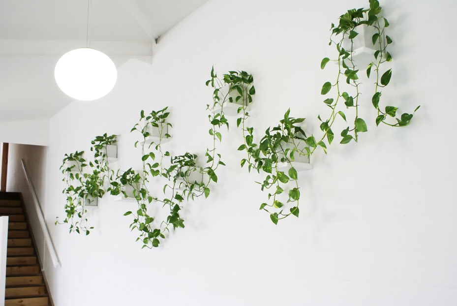 Trailing plants on a wall.