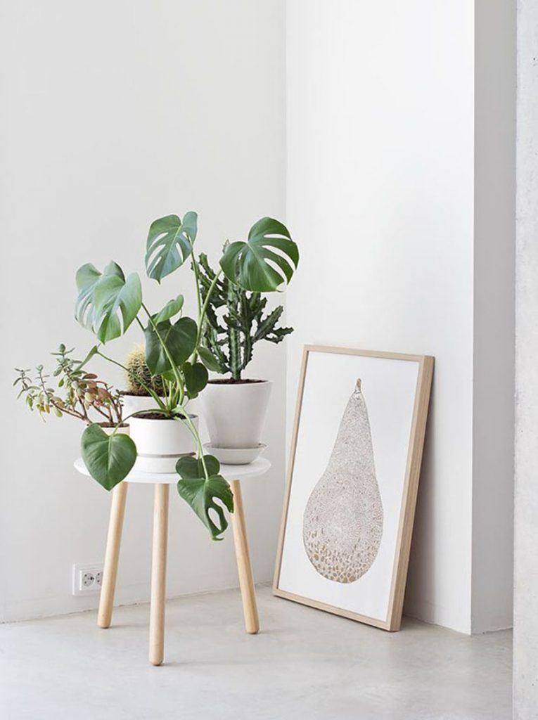 Three house plants on a stool.